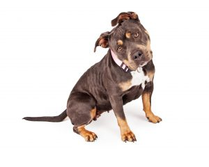 In-home dog training