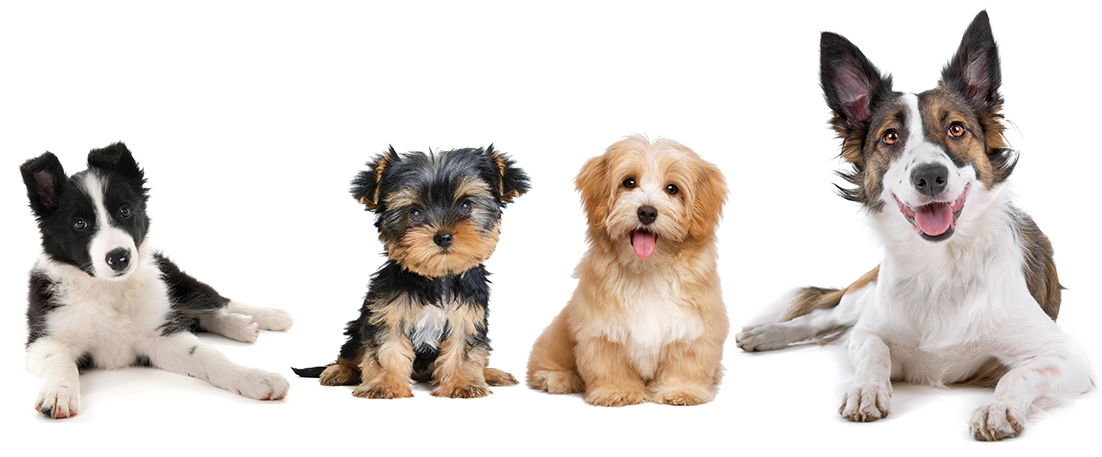 tucson dog classes