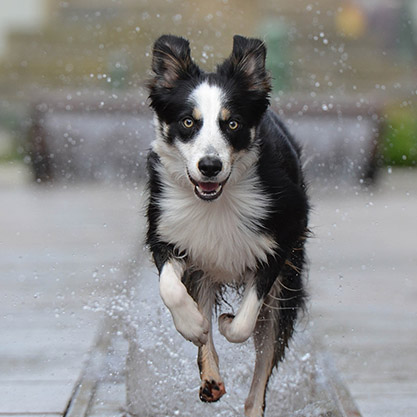 tucson dog recall class