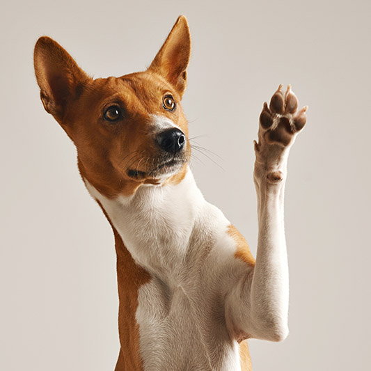 tucson dog trick class