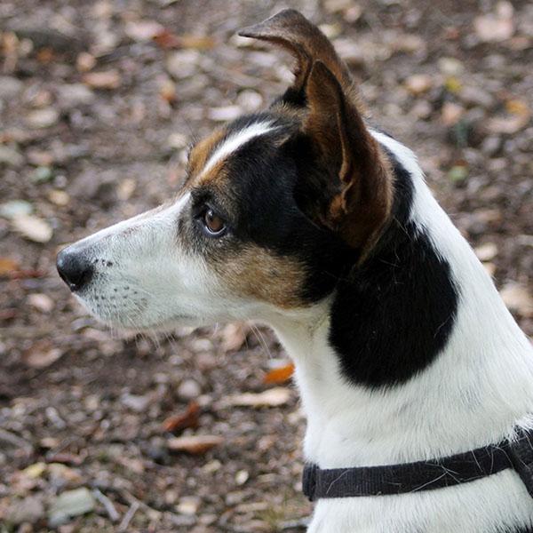 tucson dog day training