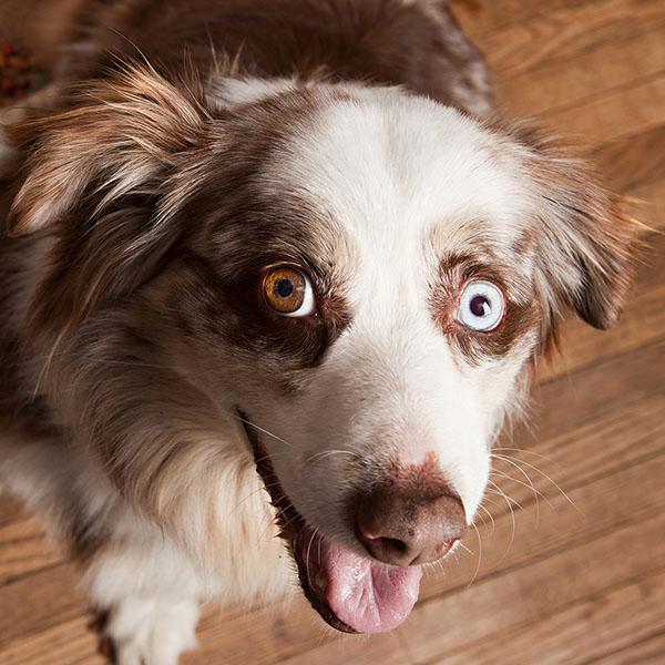 tucson dog coaching