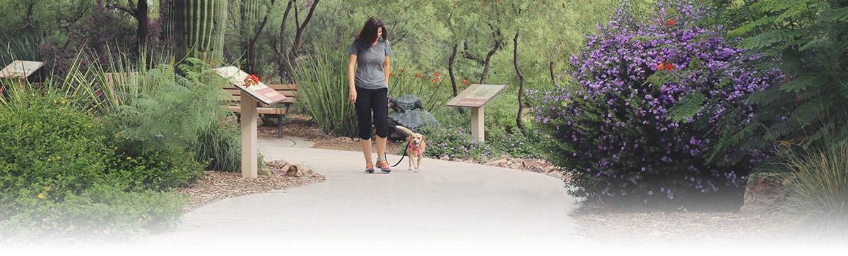 tucson private dog training